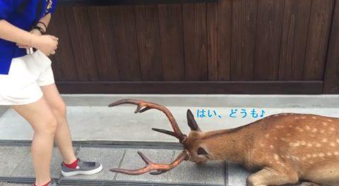 nara-park-polite-deer02