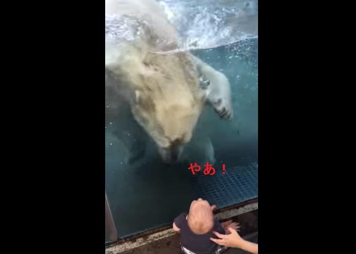 polar-bear-attack-attempt-on-baby01