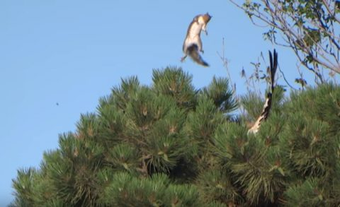squirrel-escapes-from-being-dinner02