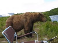 bear-sits-next-to-guy01