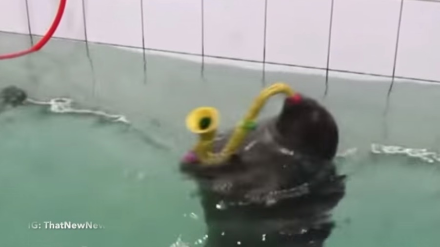 funny-seal-playing-sax01