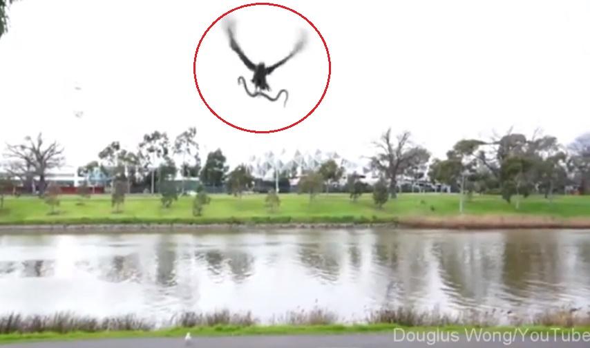hawk-throws-snake01