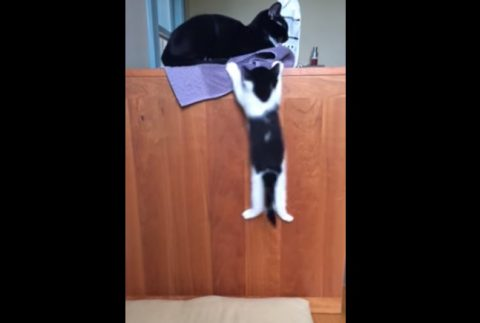 kitten-attempts-to-jump-on-a-desk01