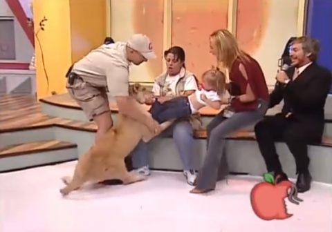 lion-attacks-toddler-on-mexican-tv-show02