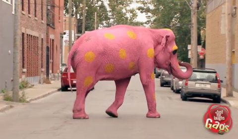 pink-elephant-prank02