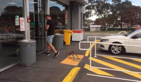 pet-kangaroo-is-your-best-riend02