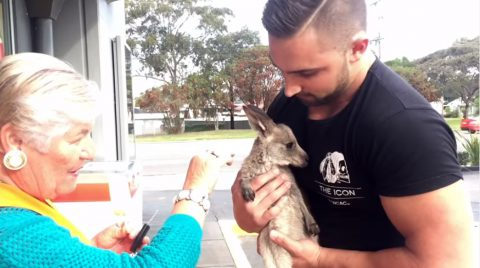 pet-kangaroo-is-your-best-riend03