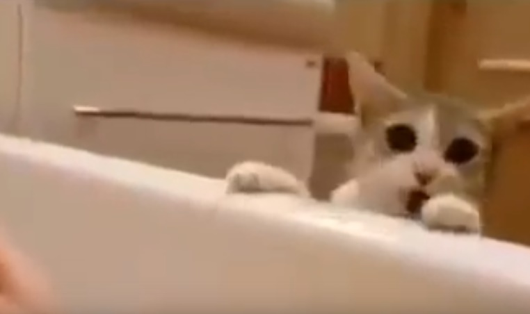 cat-tries-saving-his-human-from-drowning01