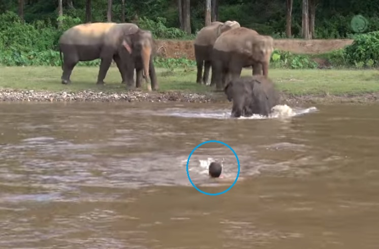 elephant-come-to-rescue-people01