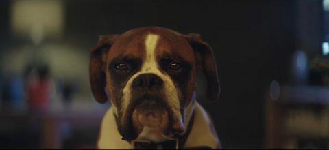 buster-the-boxer04