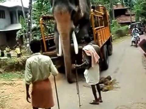 elephant-dismount-from-lorry02