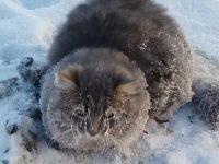 rescuing-frozen-cat01